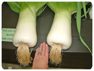 there are some secret to grow this giant vegetable