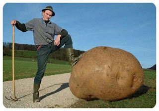 giant potato - looks like good photoshop editing to me