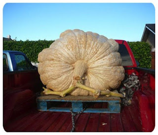 thanks for this rare kind of giant pumpkin or we need a truck to buy that