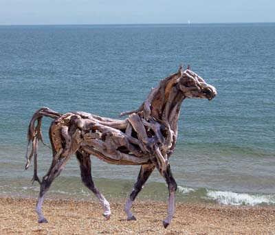 a wild horse at seashore