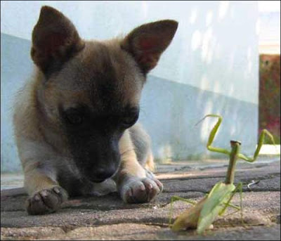 curious dog with insect