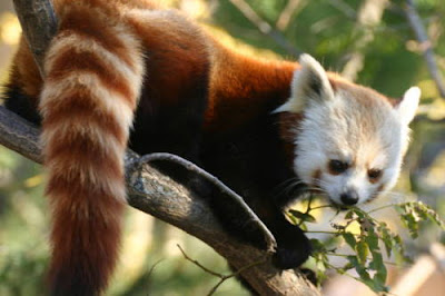 have you think about real firefox when browsing internet using firefox browser