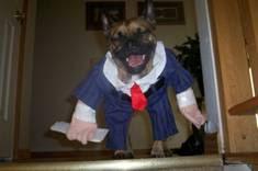 wedding dress for dog