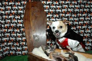 valentine dog dress