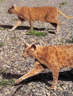 cat painted like giraffe