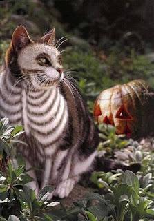 skull cat for halloween