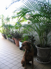 Un can, una terraza