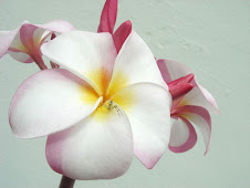 Frangipani, another one