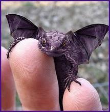 I wish I had my very own baby dragon!