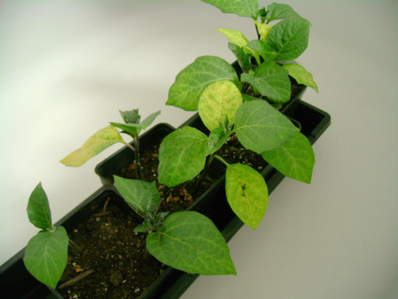 plant zone around the basement