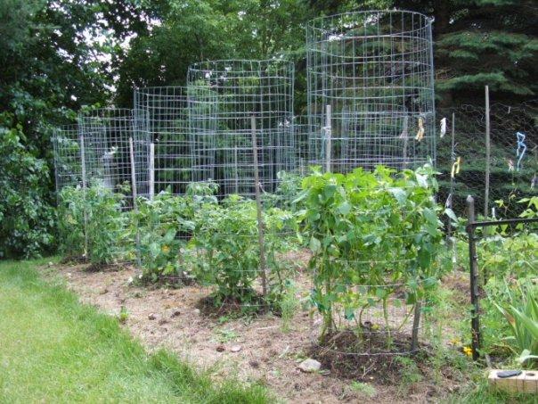 green zebra market garden make your own sturdy tomato cages. Black Bedroom Furniture Sets. Home Design Ideas