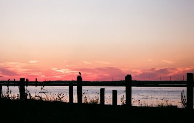 sunset, dock, bird, silhouette, chincoteague, VA