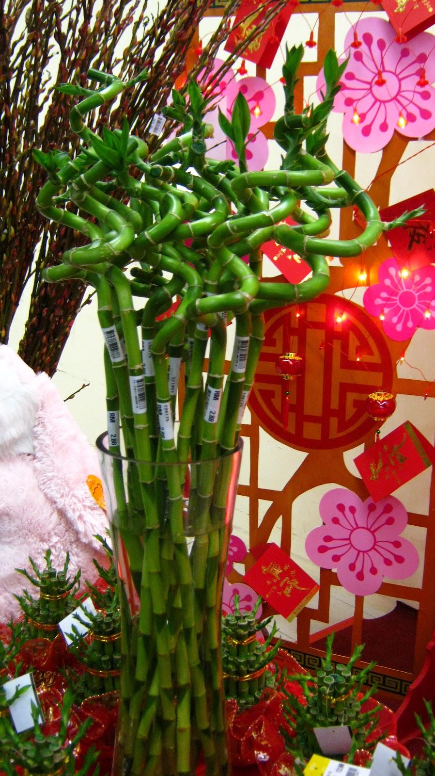 Ongzi\'s SecretGarden: CNY Decorative Plants : Ribbon Dracaena 万年青