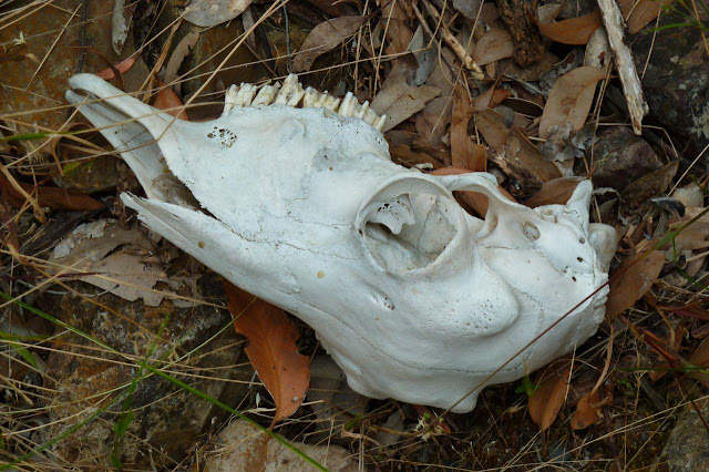 animal skull in gorge