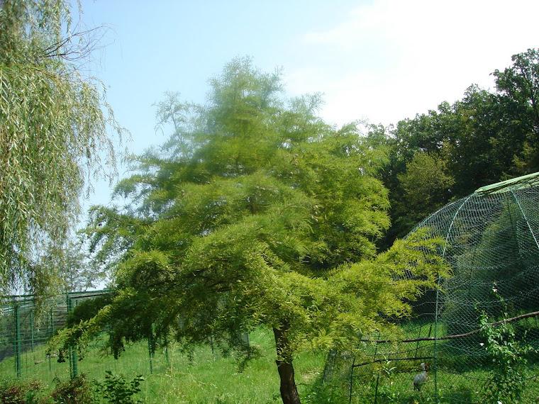 un arbore pitoresc