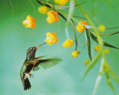 rizqi ilahi: koleksi gambar burung