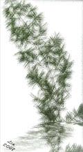 PLANTA SCANNEADA