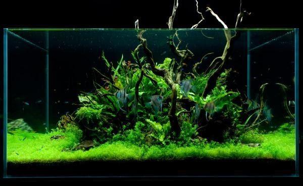 Aquatic Eden Cheap Scapes Tips For Budget Aquascaping