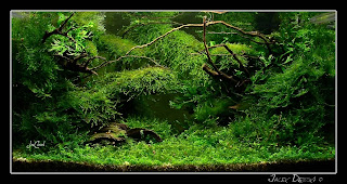 This Weeku0027s Aquascape Is A Special One, Since Itu0027s Primarily A Moss  Aquascape. All Different Types Of Aquatic Moss Come Together To Make A Very  Unique ...