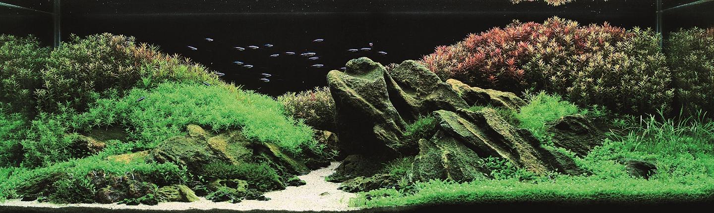 Aquatic Eden Aquascaping Aquarium Blog