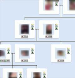 Como Criar Arvore Genealogica no Orkut