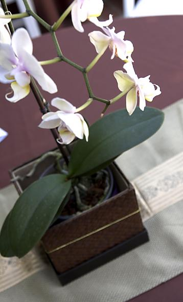 Potted Flower Esp Orchid Centerpiece Ideas Need Help