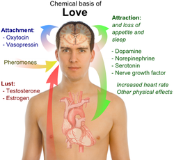 external image 250px-Chemical_basis_of_love.png