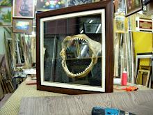 siap frame