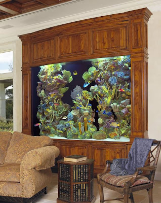 [Gambar: in_house_aquarium_1.jpg]