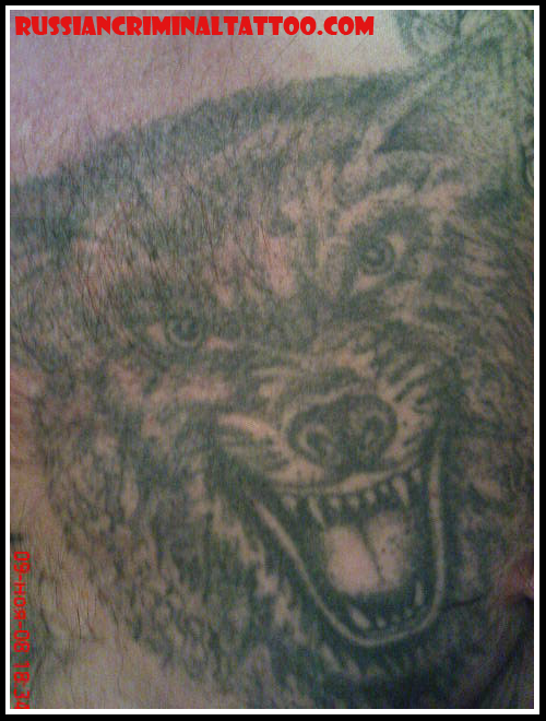 tatuaje sobre lobo. Author: El tatuaje criminal ruso | Posted at: 15:43 | Filed Under: LOBO |