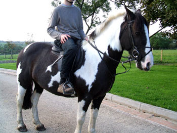 black horses riding/ponies photos pictures gallery