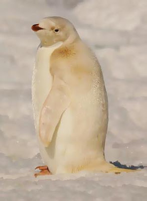 photos of The Emperor Penguin pics wallpapers