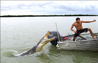 pictures of Crocodiles attack people
