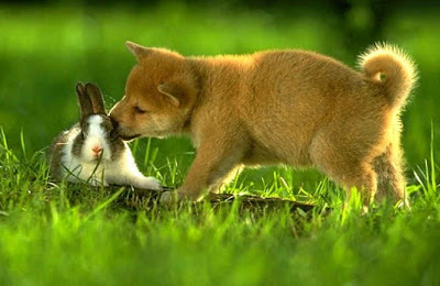 cute Rabbit and dog photos/posters