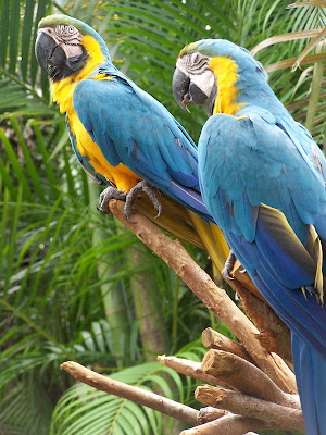 Parrots for sales/birds for sale pics/images collections