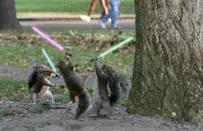 three Jedi Squirrels playing photos