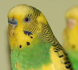 cute pet parrot photos