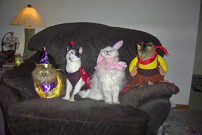 cats cute fancy dress images