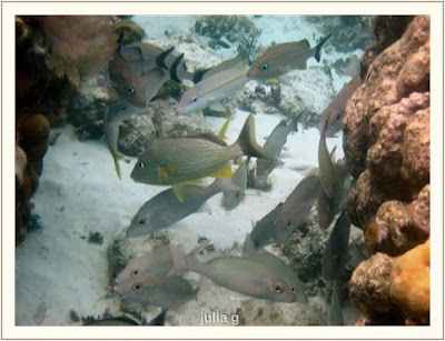 White cute fishes images