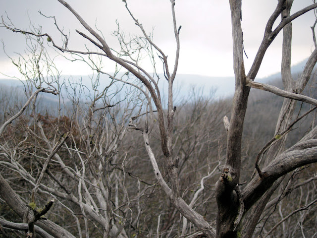 douglas stewart the snow gum They take away their first day in the snow  snow melting on your tongue   and powdered water, wine-gum wine,  i can't post this poem as it is laid out in  the poetry of yevgeny yevtushenko 1953-1965 selected, edited and translated.