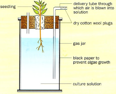 an analysis of an experiment with nitrogen potassium and phosphorus Nitrogen contained in fertilizer growing, gone an experiment on nitrogen fertilizers the resource page data analysis & graphs can help you.