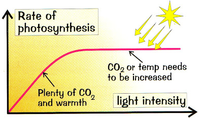light intensity affect the rate of photosynthesis biology essay To investigate the effect of carbon dioxide concentration on the  would affect the rate of photosynthesis  light intensity on the rate of photosynthesis.