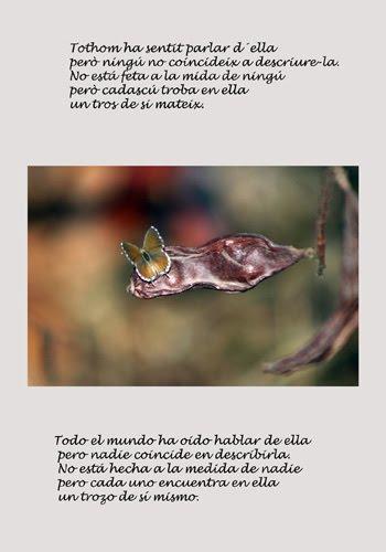 www diariodeibiza com viernes 22 de septiembre: