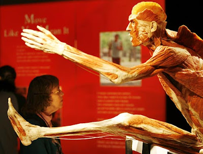 Side view of the jumping man at the Body Worlds Exhibit