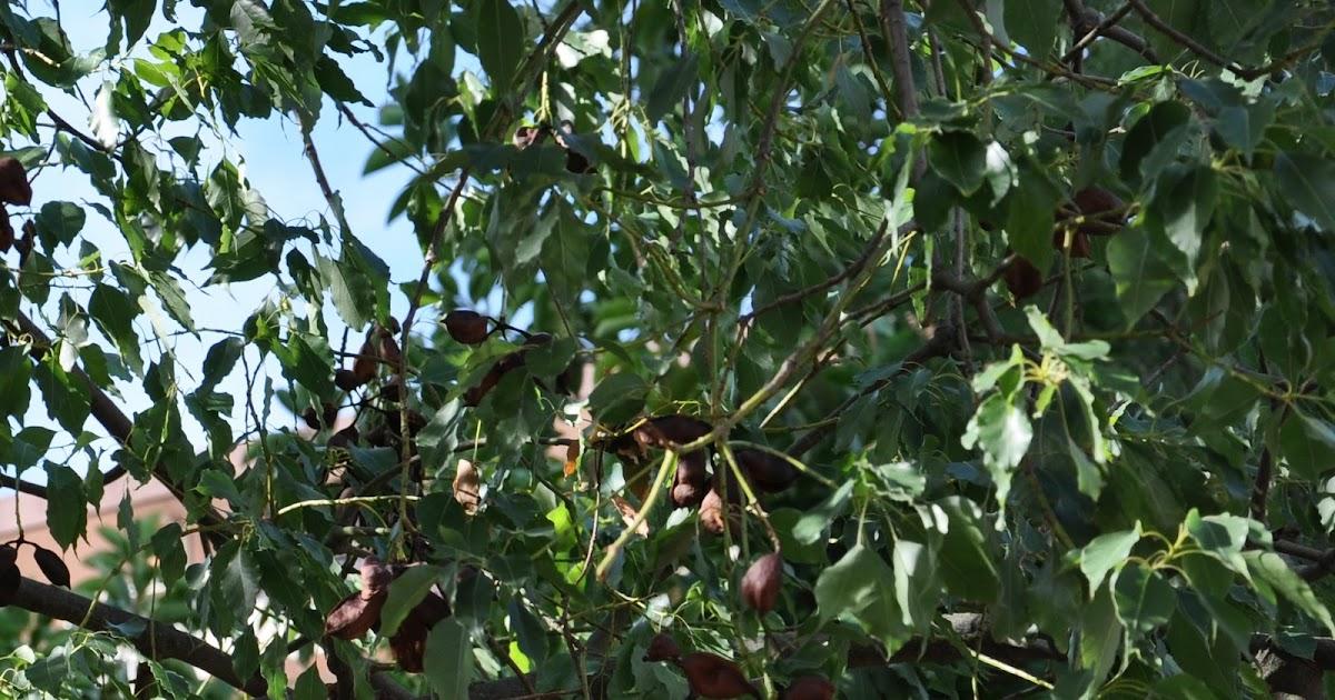 Cagliari in verde la pianta con i frutti lampadario for Pianta con la i