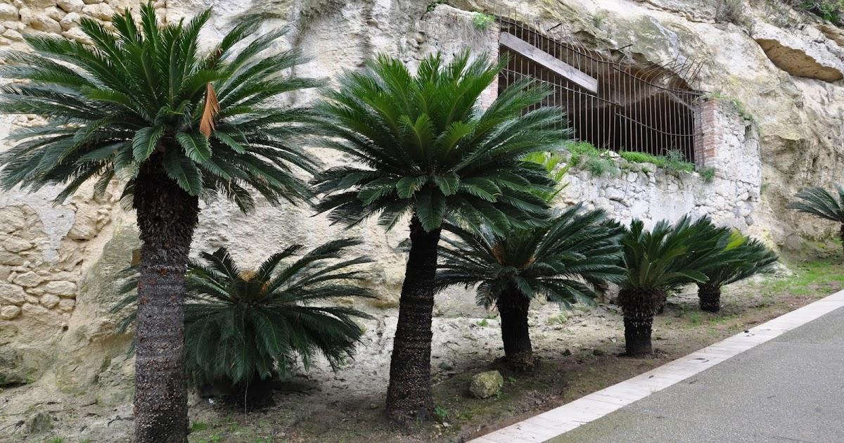 Cagliari in verde le palme - Colorazione pagine palma domenica ...