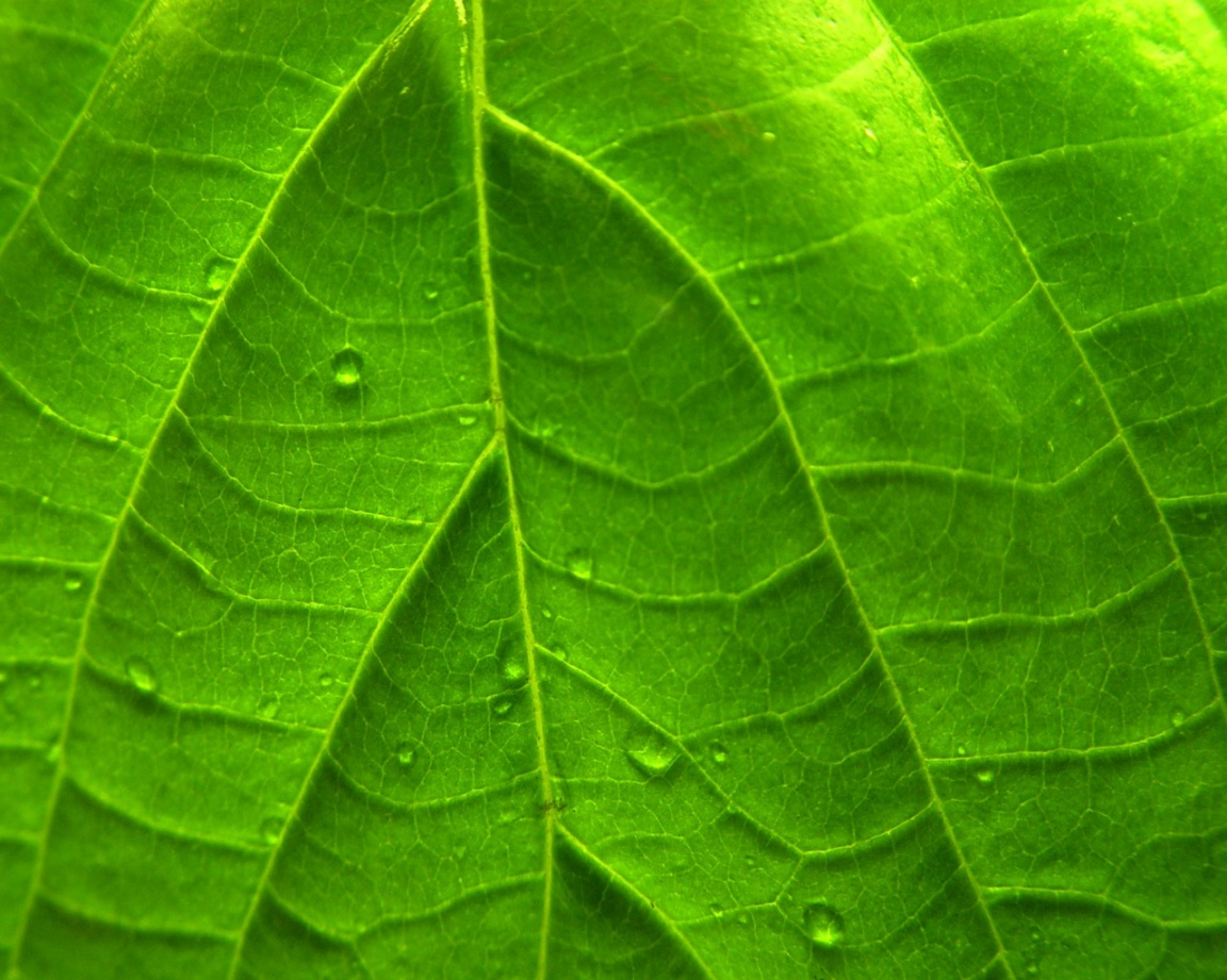 http://3.bp.blogspot.com/_d32KZ5GCptc/TJc7rkELmoI/AAAAAAAABGg/3AW-Ep4vX8E/s1600/ws_Green_Vivid_Leaf_1152x864.jpg