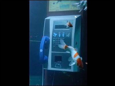 Cabina telefonica o acuario? Acuario+en+un+telefono+05