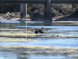 under Galena bridge, Murchison river, WA
