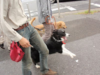 http://border-polly.blogspot.jp/2010/01/blog-post_26.html
